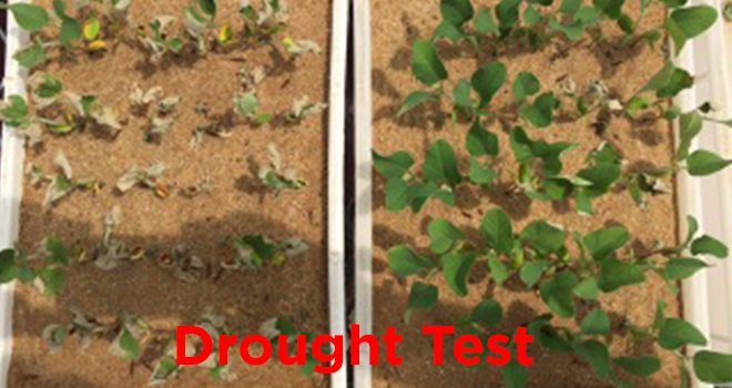 kgsagro.com-droughttest1